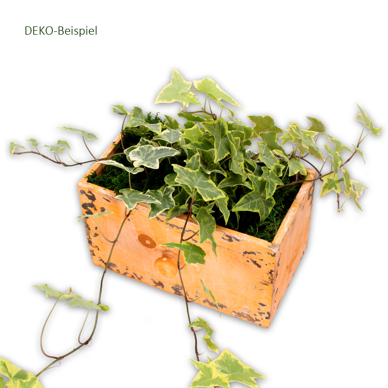 Dekomoos Naturprodukt Deko Moos Basteln Dekorieren
